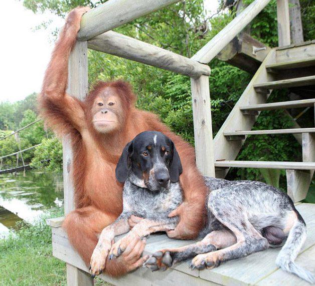 monkey-dog2