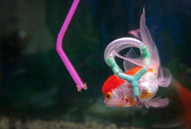 peixe-3