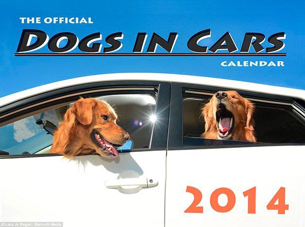 DogsinCars10