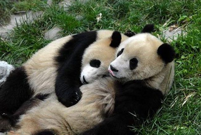 loving-animals-using-each-other-as-pillows-my-heart-has-melted-completely-14