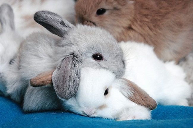 loving-animals-using-each-other-as-pillows-my-heart-has-melted-completely-18