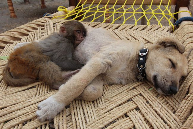 loving-animals-using-each-other-as-pillows-my-heart-has-melted-completely-24