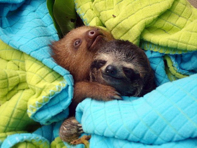 loving-animals-using-each-other-as-pillows-my-heart-has-melted-completely-3