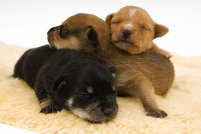 loving-animals-using-each-other-as-pillows-my-heart-has-melted-completely-5