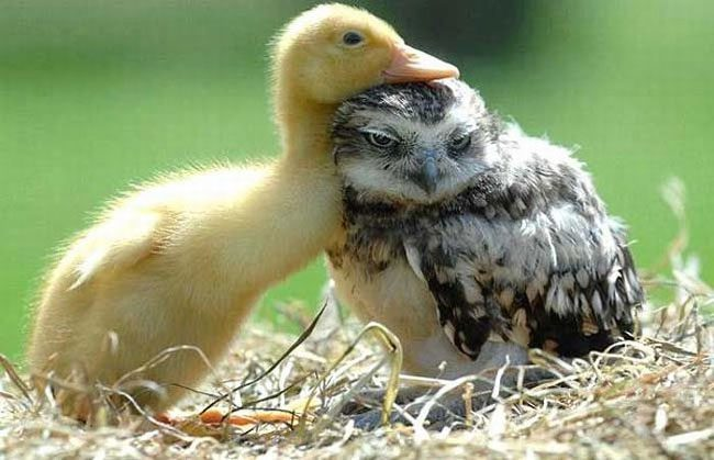 loving-animals-using-each-other-as-pillows-my-heart-has-melted-completely-6
