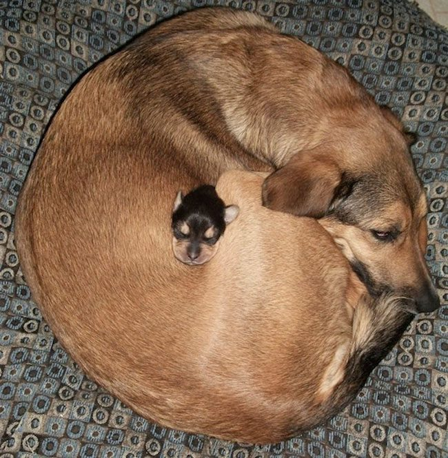 loving-animals-using-each-other-as-pillows-my-heart-has-melted-completely-7-1