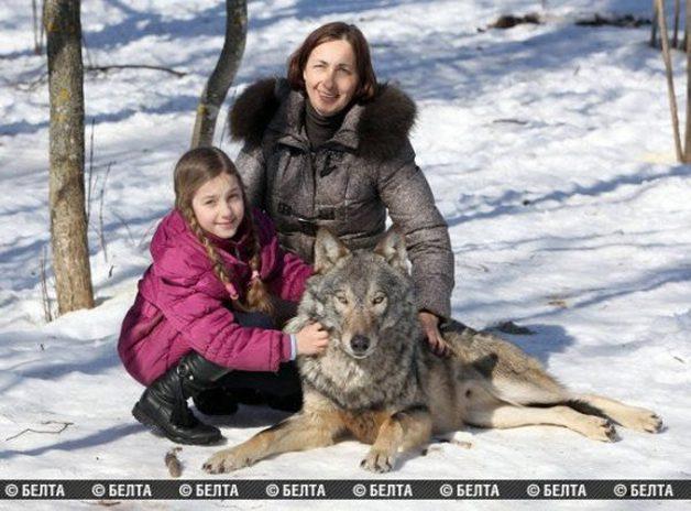 lobo-animal-estimacao1