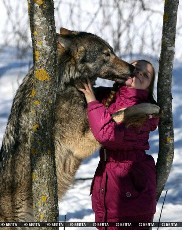 lobo-animal-estimacao4