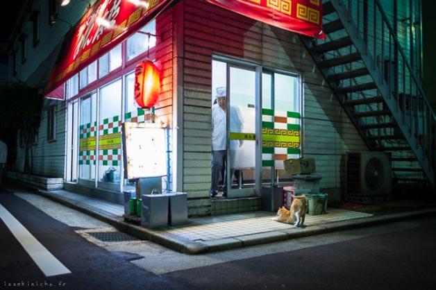 gatos-japao21