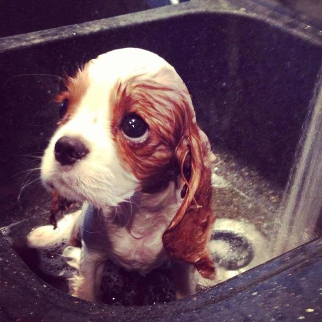 cachorros-banho-11