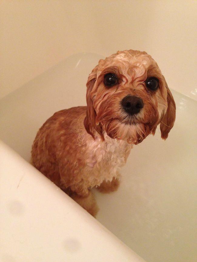 cachorros-banho-13