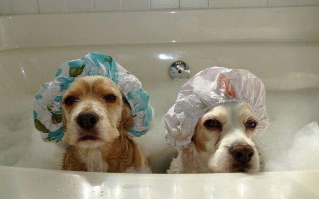 cachorros-banho-16