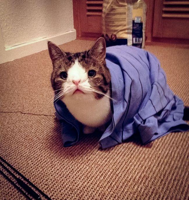 monty-gato-diferente-1