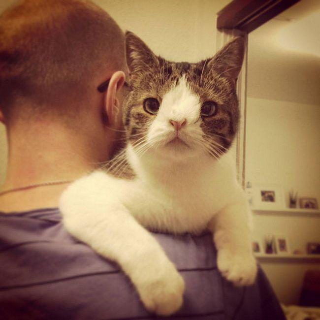 monty-gato-diferente-2