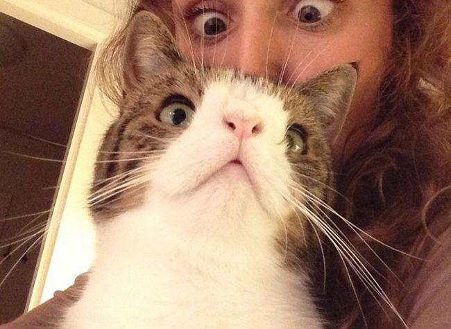 monty-gato-diferente-7