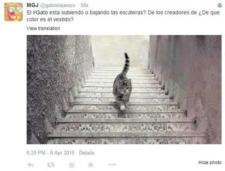 gato-4