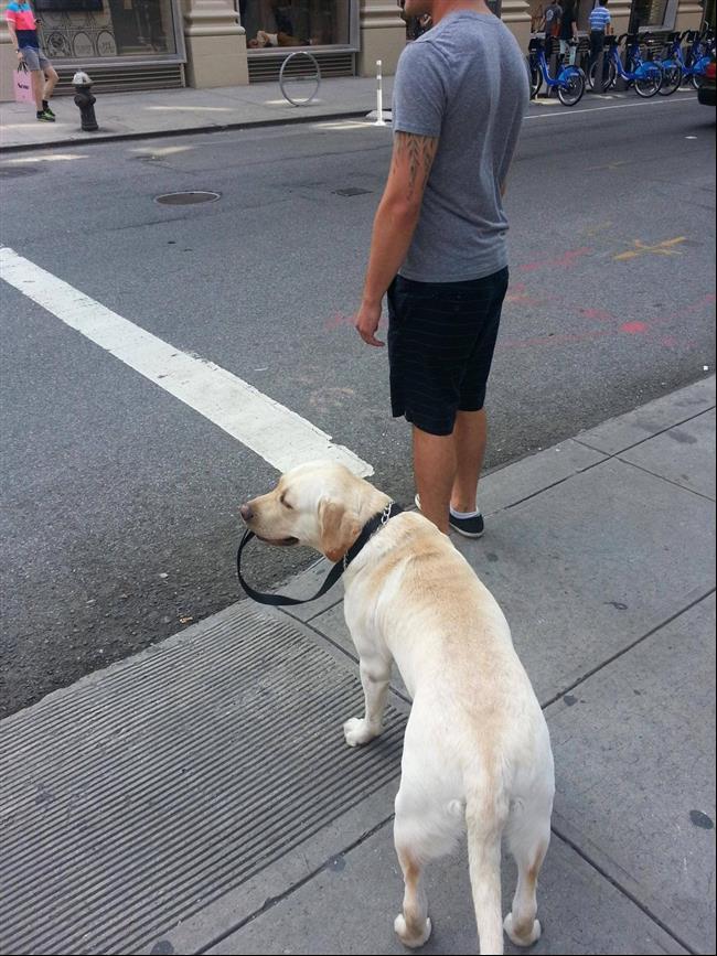 cães-que-não-precisam-de-seus-donos-para-passear-4