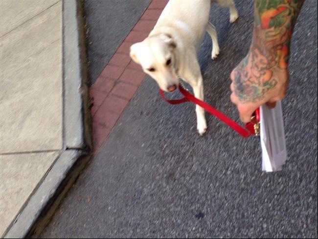 cães-que-não-precisam-de-seus-donos-para-passear-7