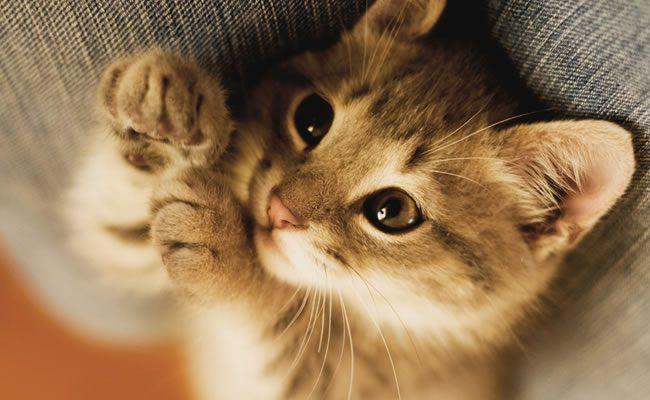 20 fatos impressionantes sobre gatos