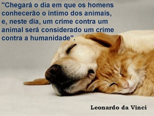 ANIMAIS-CRIATURASILUMINADAS-FOTO01