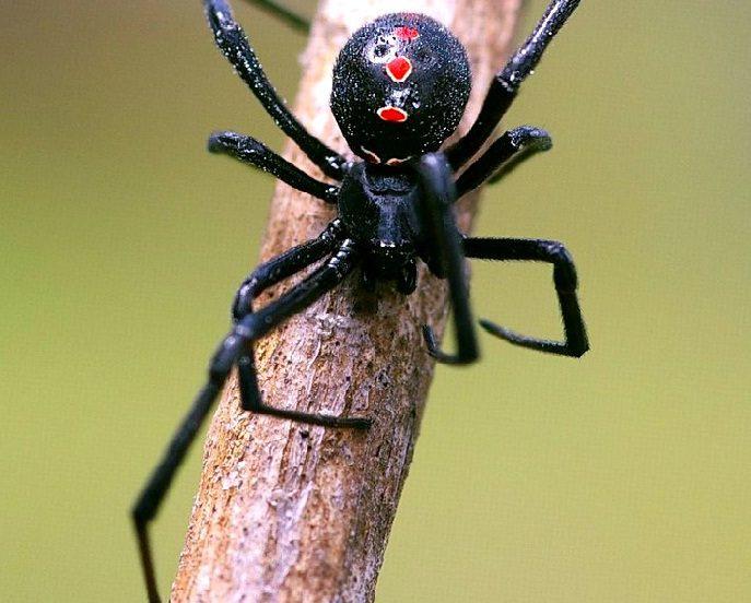 se você vê aranhas2