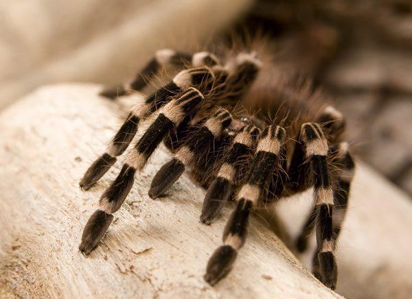 se você vê aranhas3