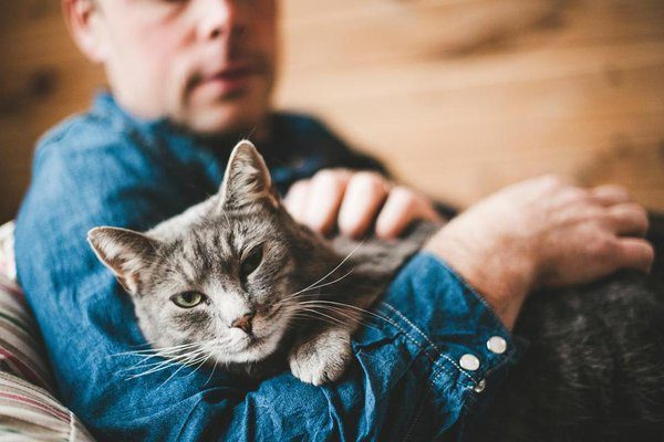 seu gato lhe demonstra3
