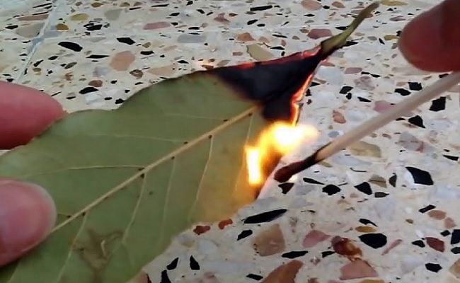 queimar folhas de