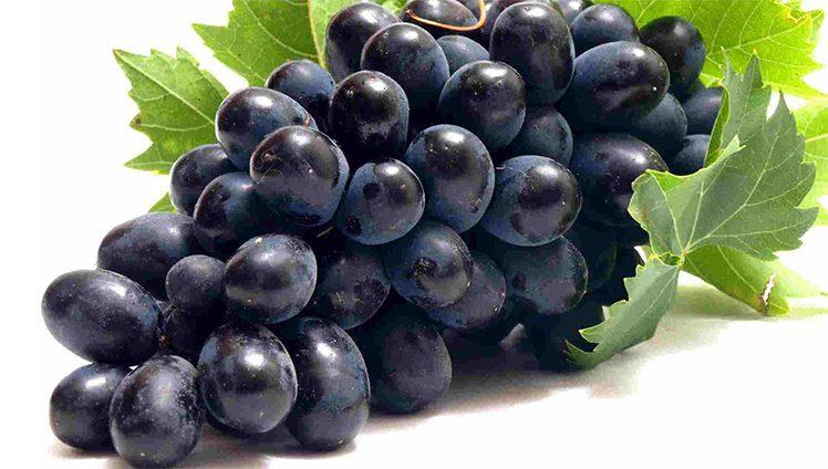 15-frutas-poderosas-que-ativam-nossa-saude-foto-04