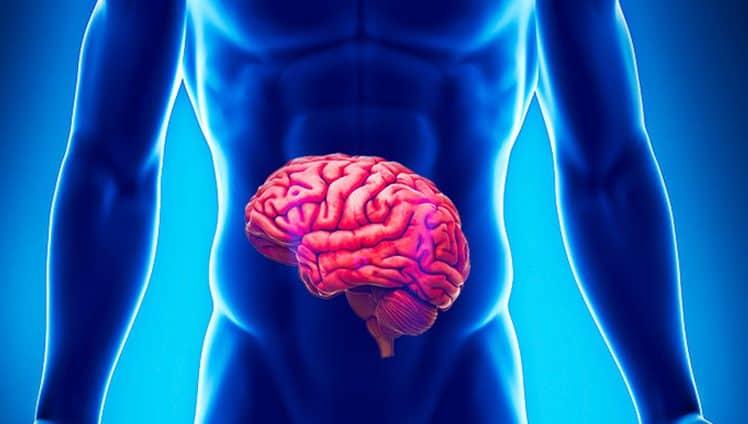INTESTINO O Cérebro que comanda a saúde do corpo