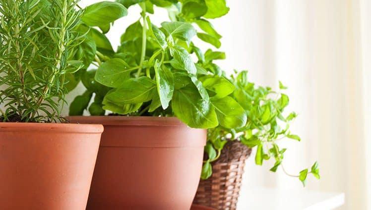 Como proteger sua energia e os benefícios das sete ervas nos ambientes