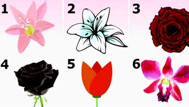 escolha a flor mais bonita