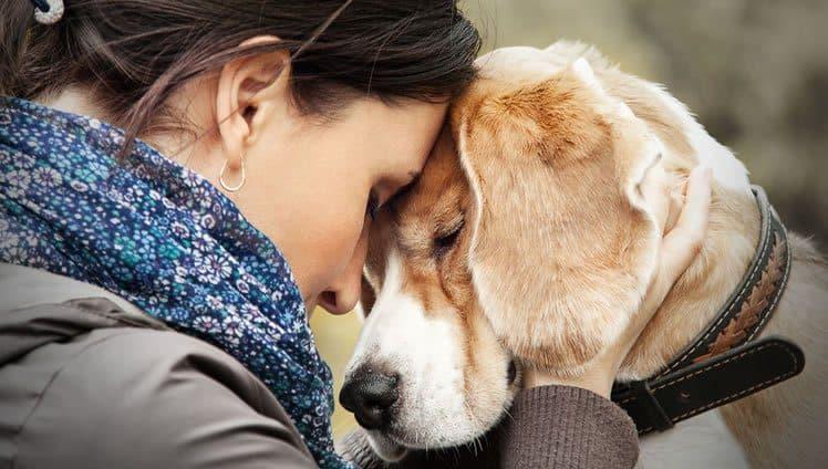 Qualidades que aprendemos com os cães