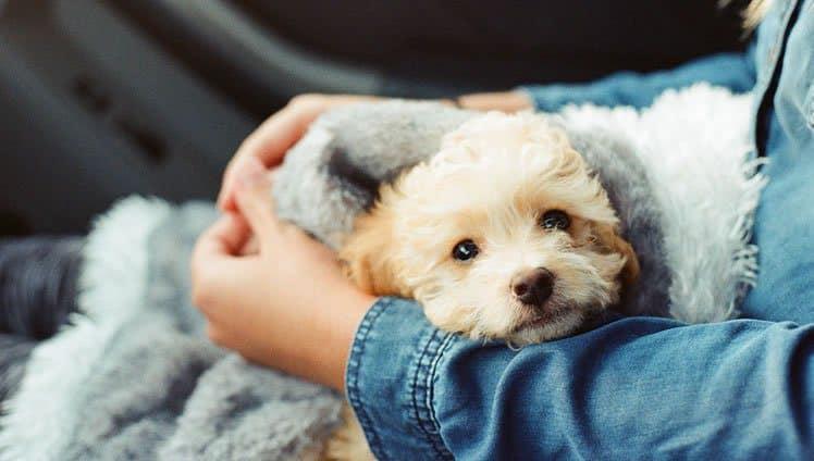 nossos cães sofrem