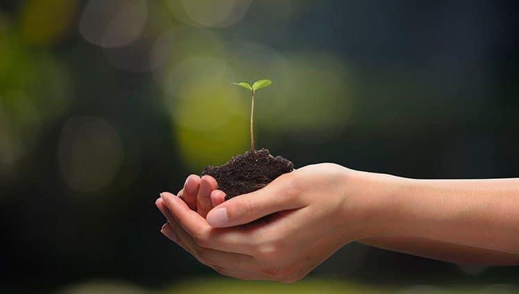 Plante agora