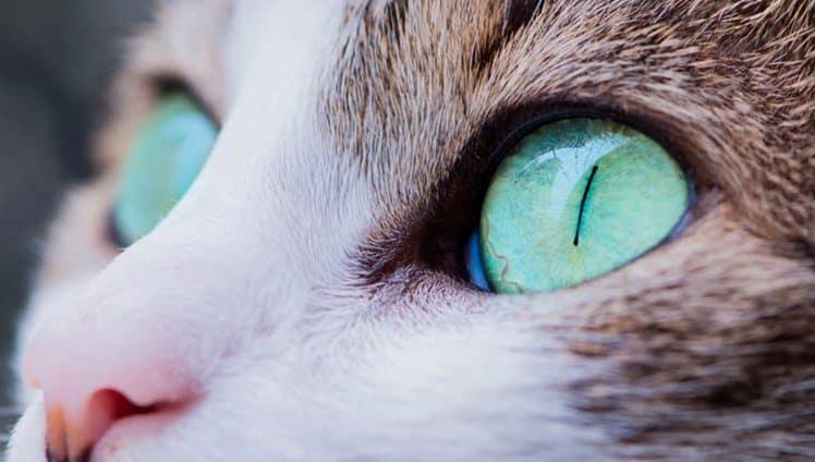 poderes de cura dos gatos