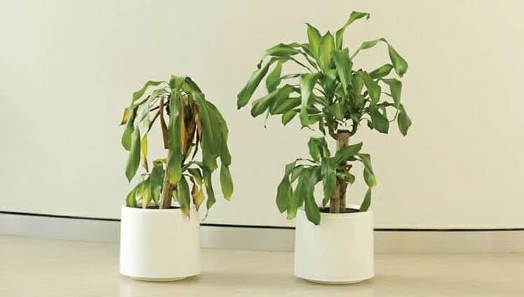 planta sofre bullying