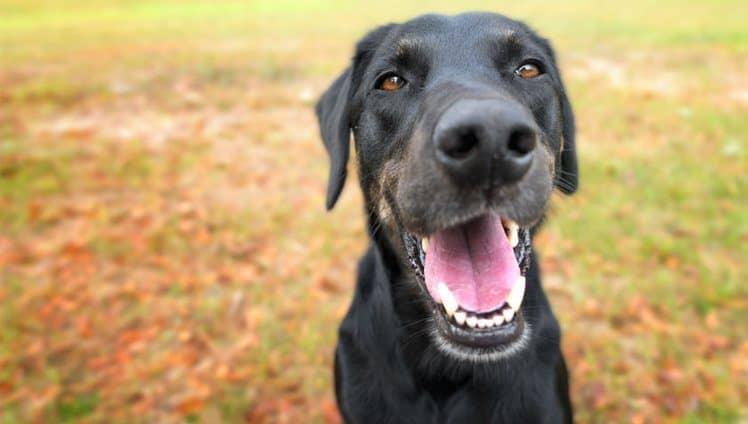 13 coisas que seu cão sabe
