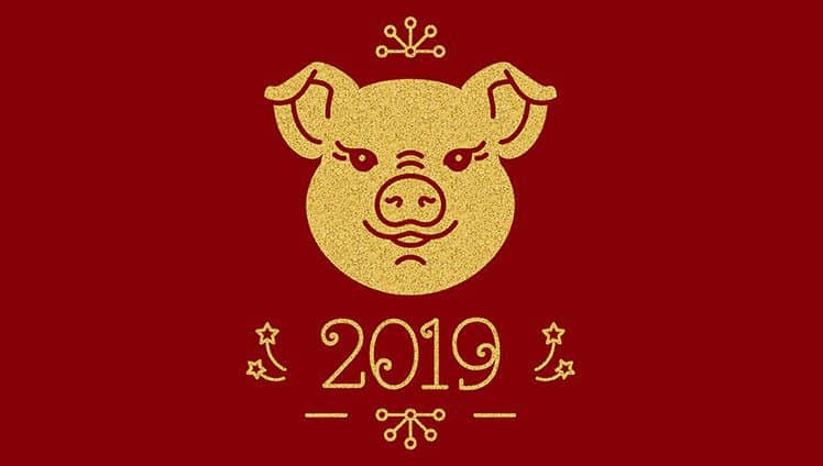2019 ano do porco