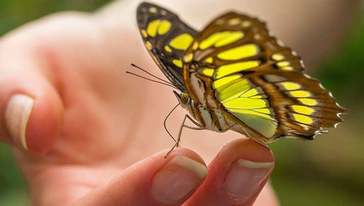 Quando a borboleta