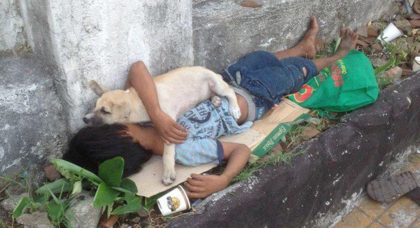 criança adota um cão