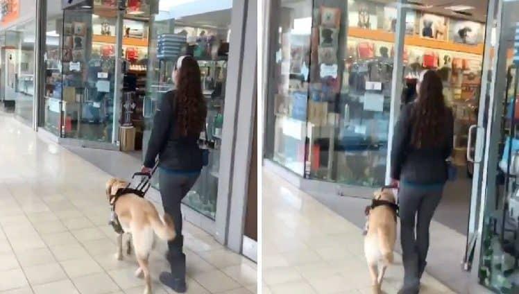 Cão-guia leva dona