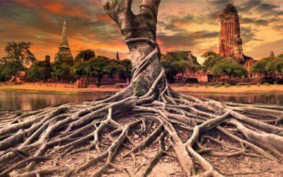árvores são curandeiras