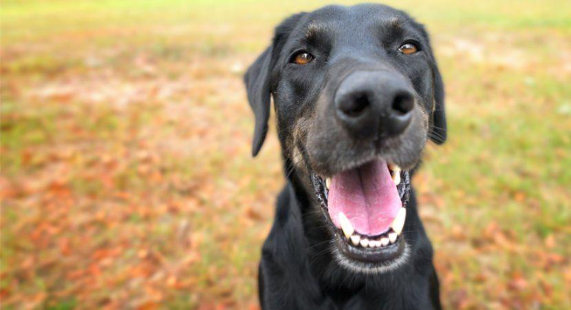 9 coisas que nossos cães