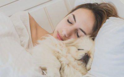 Dormimos melhor com nossos animais