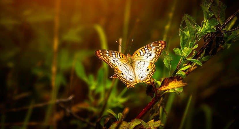 o mistério das borboletas