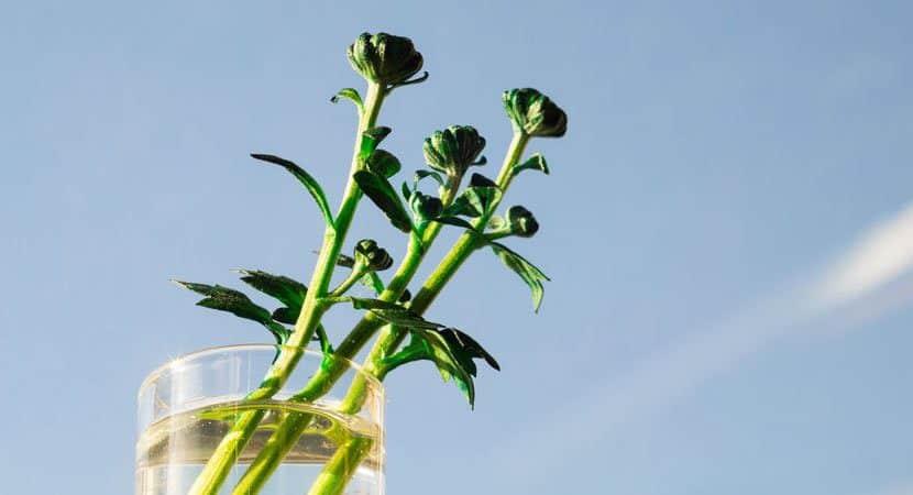 7 plantas que