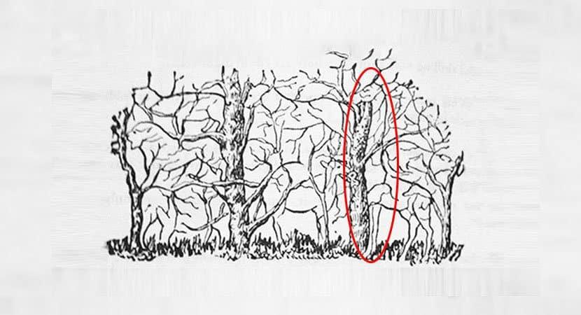 2Qual animal você vê na imagem 1