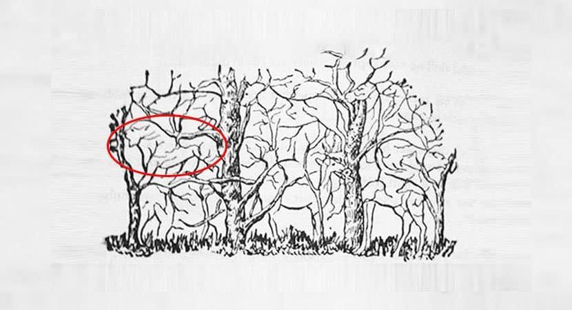 3Qual animal você vê na imagem
