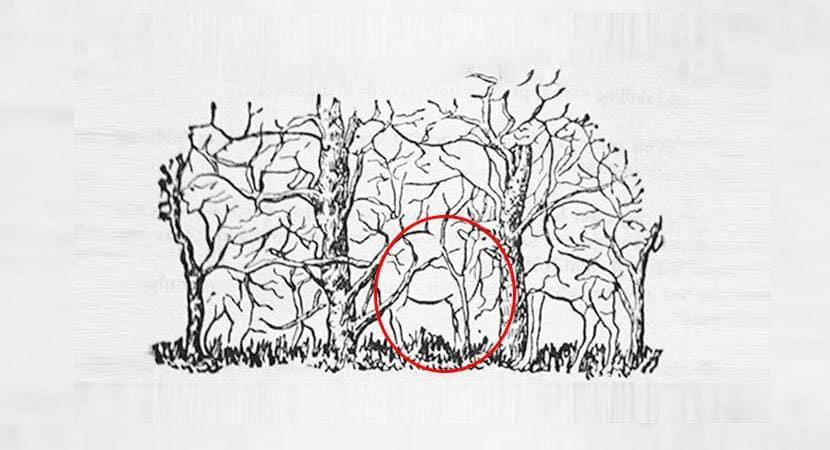 4Qual animal você vê na imagem